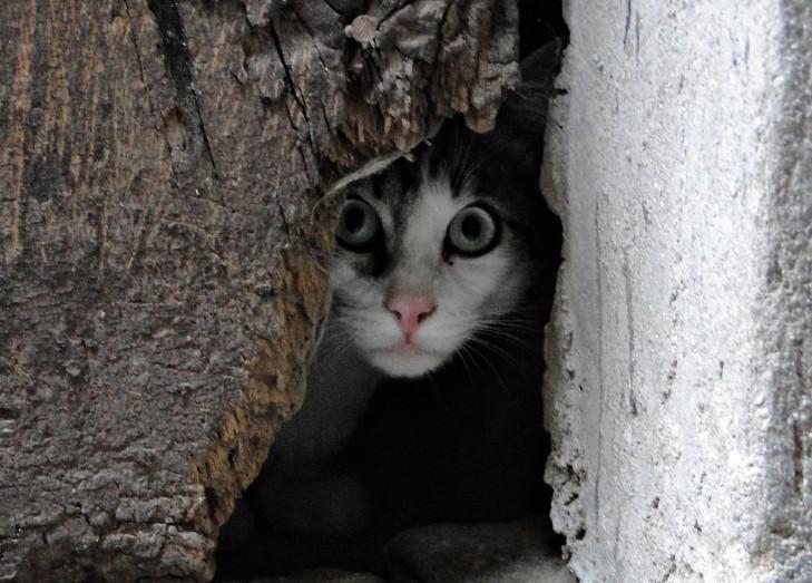 Hilltown cat 2, Apricale 097