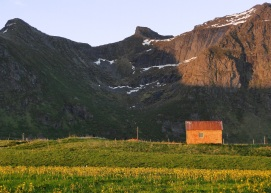 Hut in Lofoten
