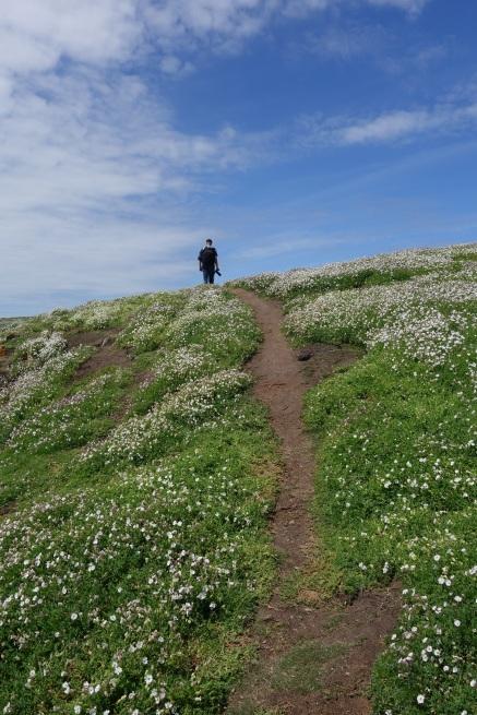 Walking on Great Saltee