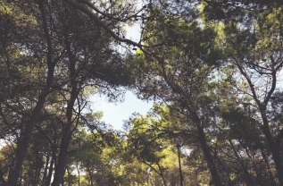 Woods of San Domino, Tremiti Isles