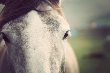 West Cork pony