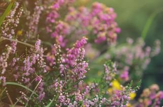 West Cork flora